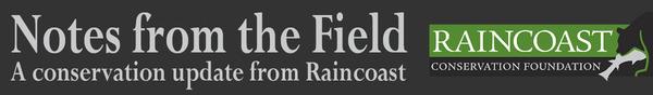 NFTF Top Banner