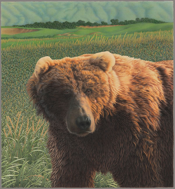 Grandfather Bear - Michael J Felber
